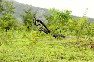 庭に鎮座する大きなカマキリのオブジェ(この意図を知っている方いたら教えて下さい。)